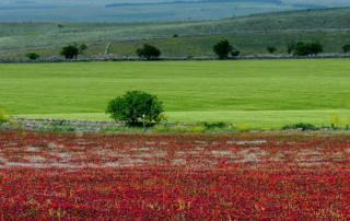 Zonas Turísticas da Puglia